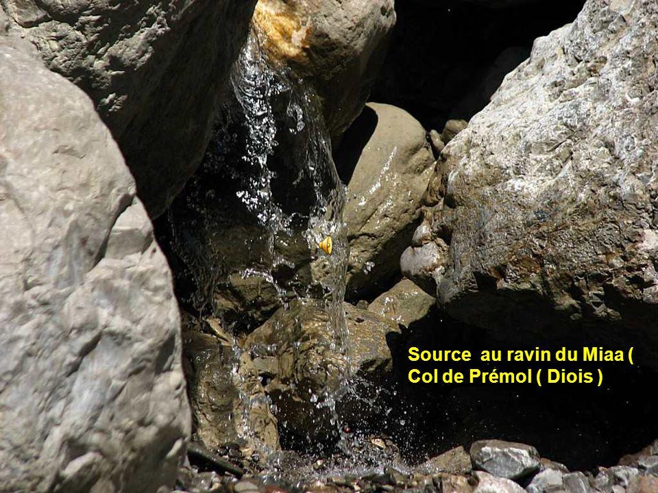 Source au ravin du Miaa ( Col de Prémol ( Diois )