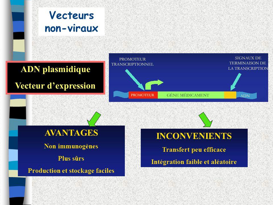 Vecteurs non-viraux ADN plasmidique Vecteur d'expression AVANTAGES