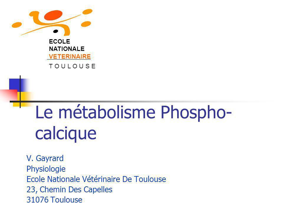 Le métabolisme Phospho-calcique