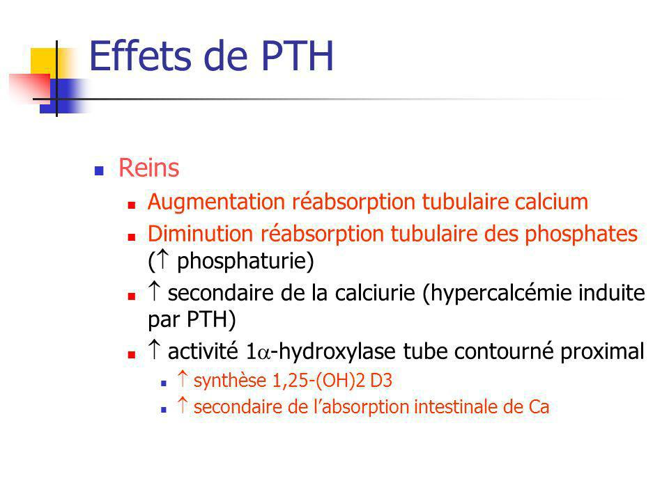Effets de PTH Reins Augmentation réabsorption tubulaire calcium