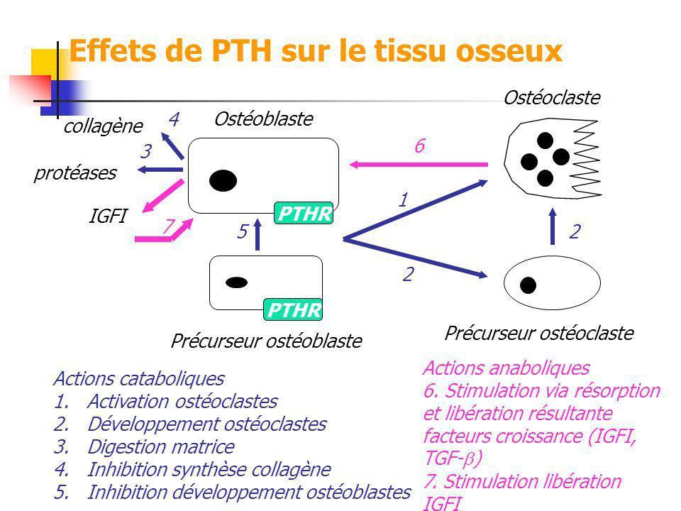 Effets de PTH sur le tissu osseux