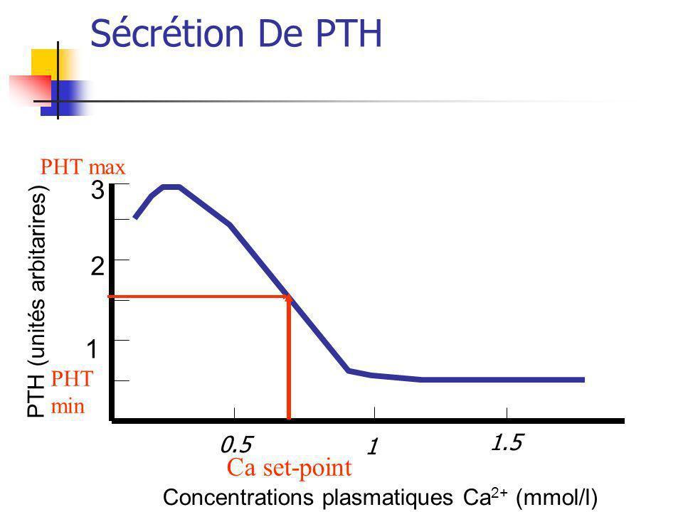 Sécrétion De PTH 3 2 1 Ca set-point PHT max PTH (unités arbitarires)