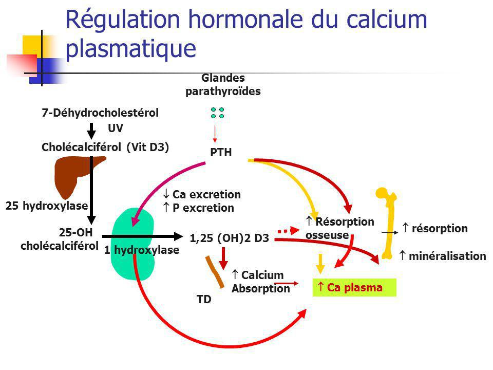 Régulation hormonale du calcium plasmatique