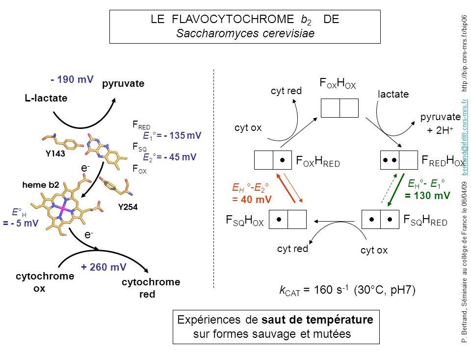 LE FLAVOCYTOCHROME b2 DE Saccharomyces cerevisiae
