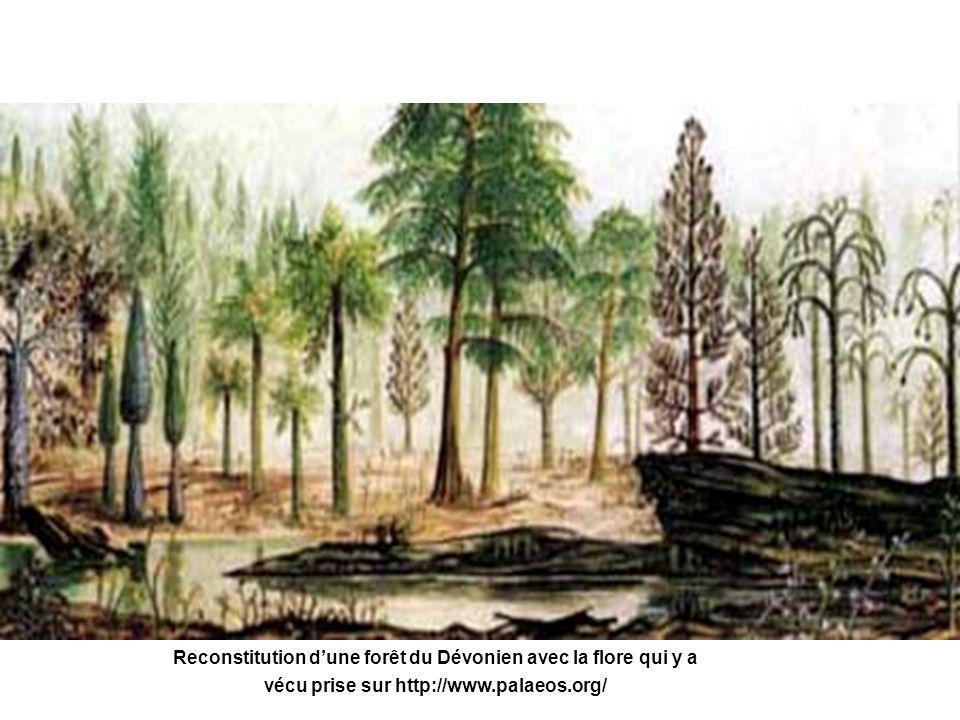 Reconstitution d'une forêt du Dévonien avec la flore qui y a vécu prise sur http://www.palaeos.org/