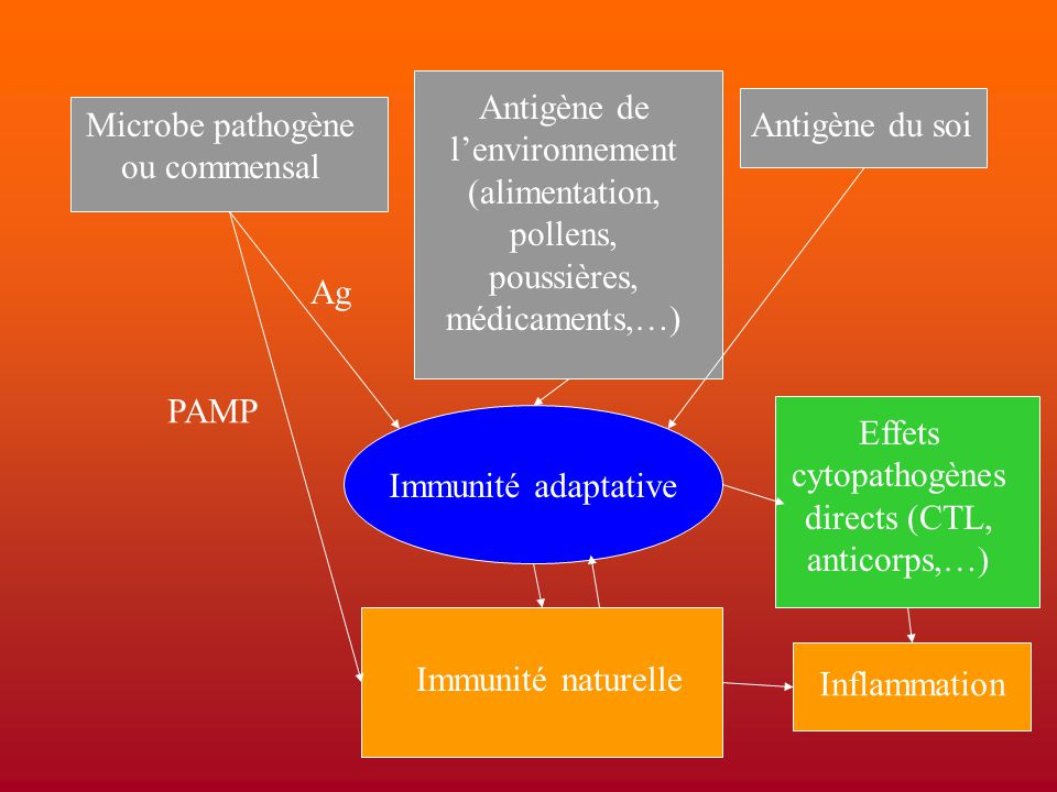 Microbe pathogène ou commensal Antigène du soi