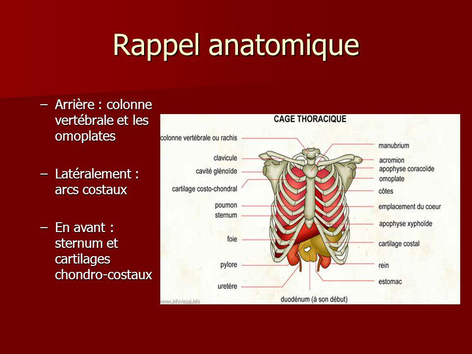 Rappel anatomique Arrière : colonne vertébrale et les omoplates