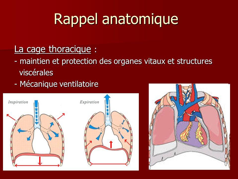 Rappel anatomique La cage thoracique :