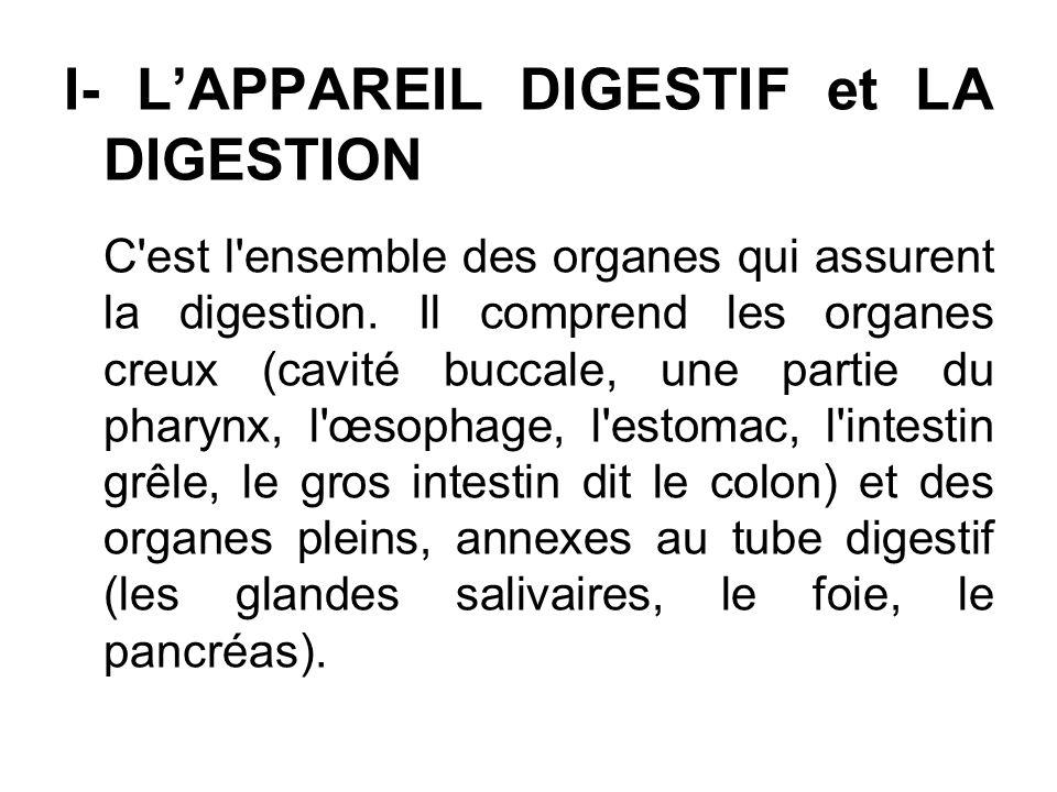 I- L'APPAREIL DIGESTIF et LA DIGESTION
