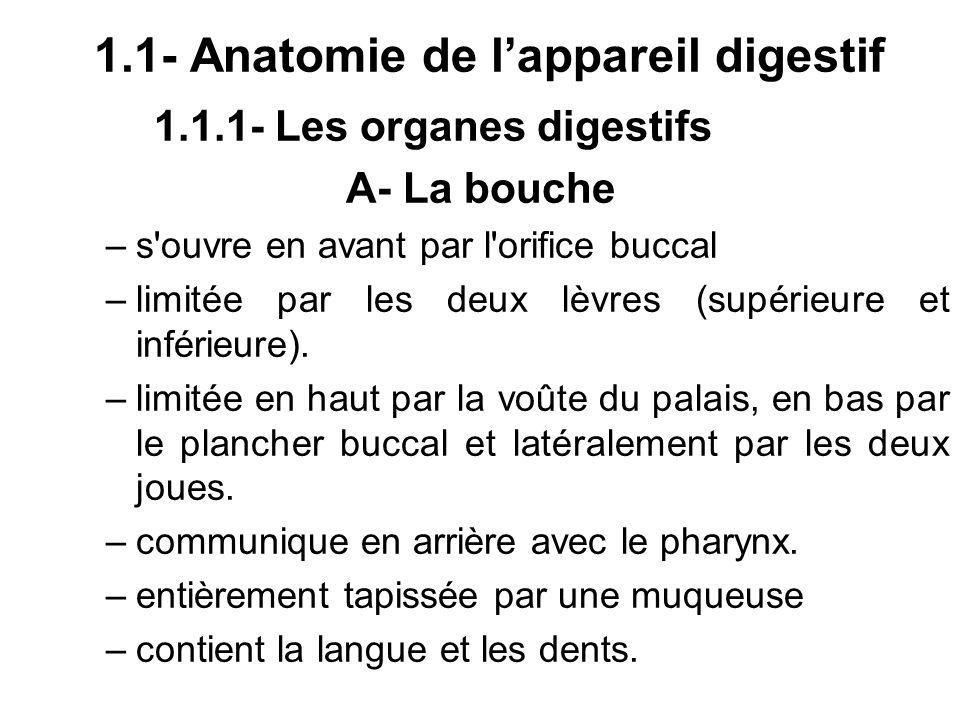 1.1.1- Les organes digestifs