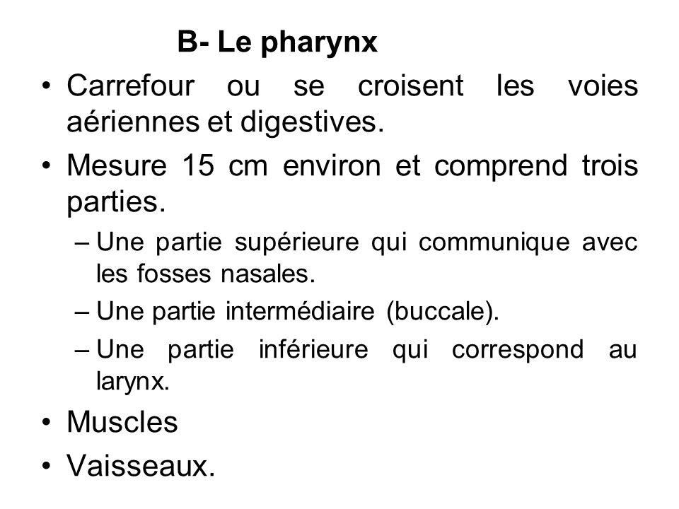 Carrefour ou se croisent les voies aériennes et digestives.