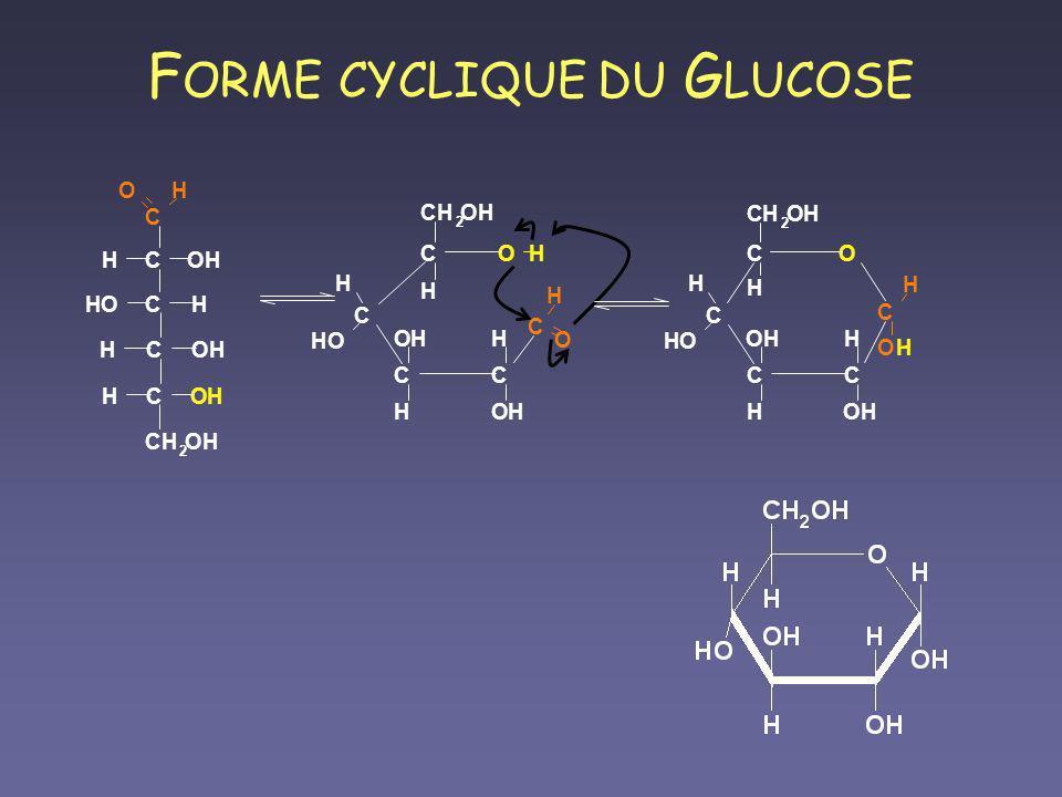 FORME CYCLIQUE DU GLUCOSE