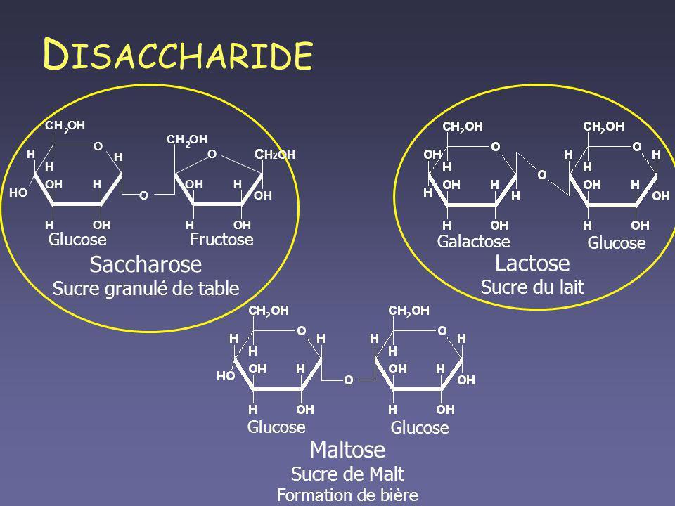 DISACCHARIDE Saccharose Lactose Maltose Sucre granulé de table