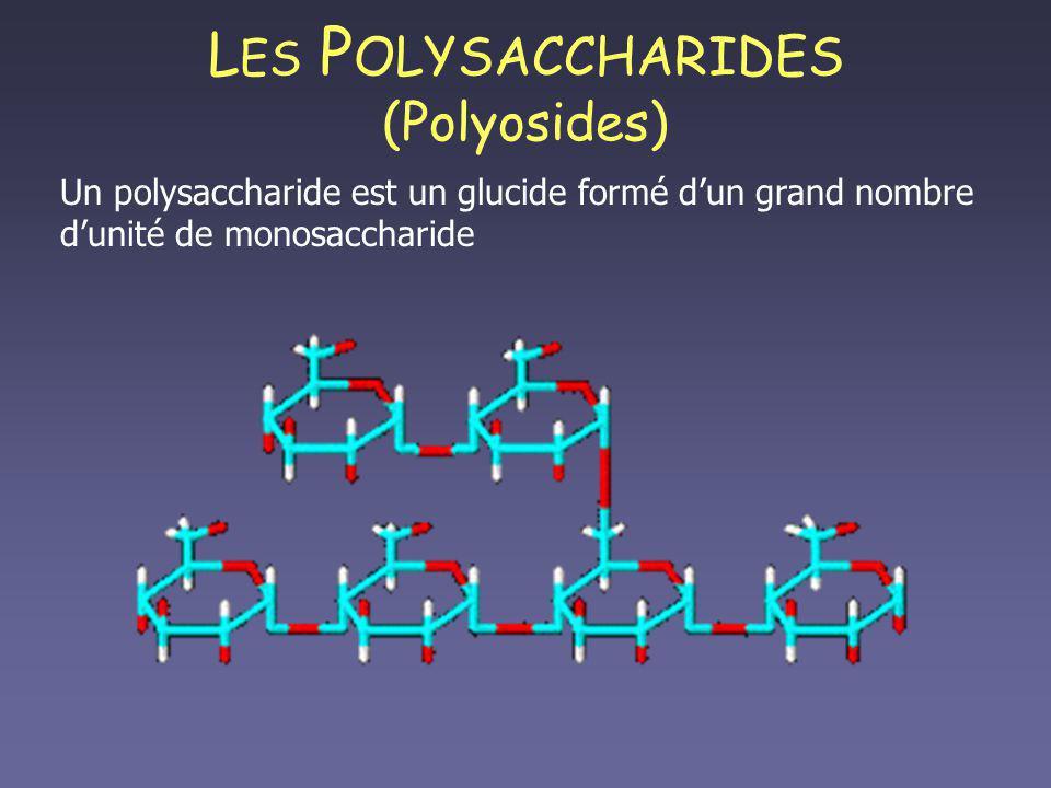 LES POLYSACCHARIDES (Polyosides)