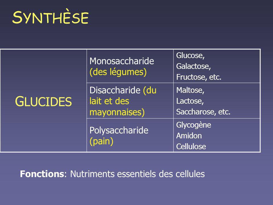 SYNTHÈSE GLUCIDES Monosaccharide (des légumes)