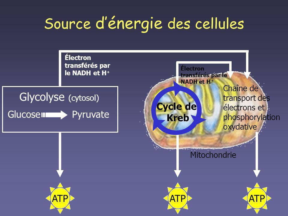 Source d'énergie des cellules