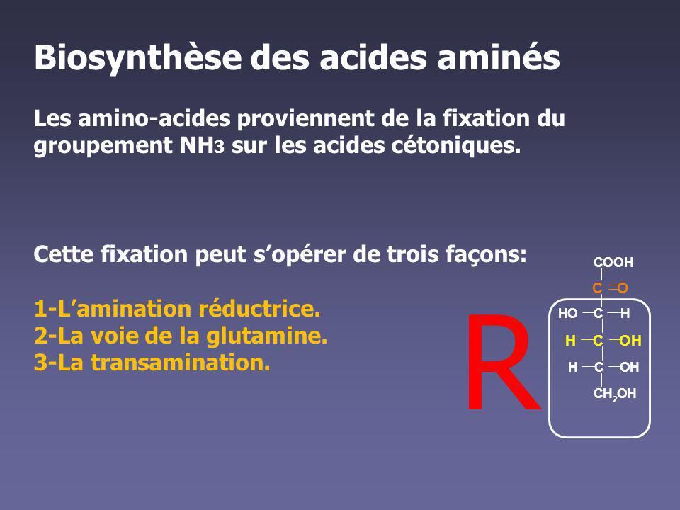R Biosynthèse des acides aminés