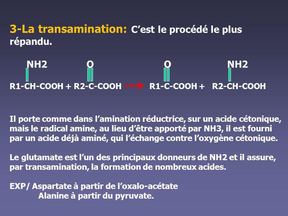 3-La transamination: C'est le procédé le plus répandu.