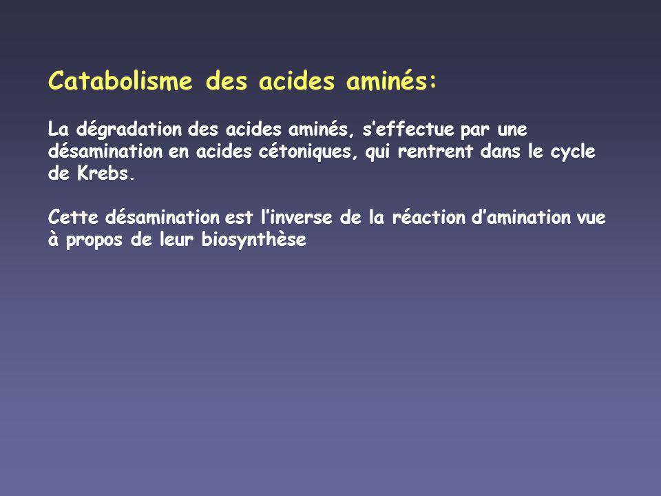 Catabolisme des acides aminés: La dégradation des acides aminés, s'effectue par une désamination en acides cétoniques, qui rentrent dans le cycle de Krebs.