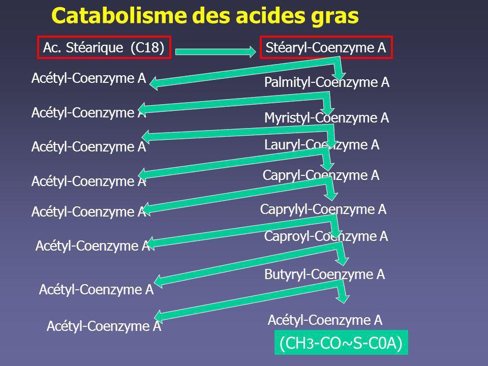 Catabolisme des acides gras
