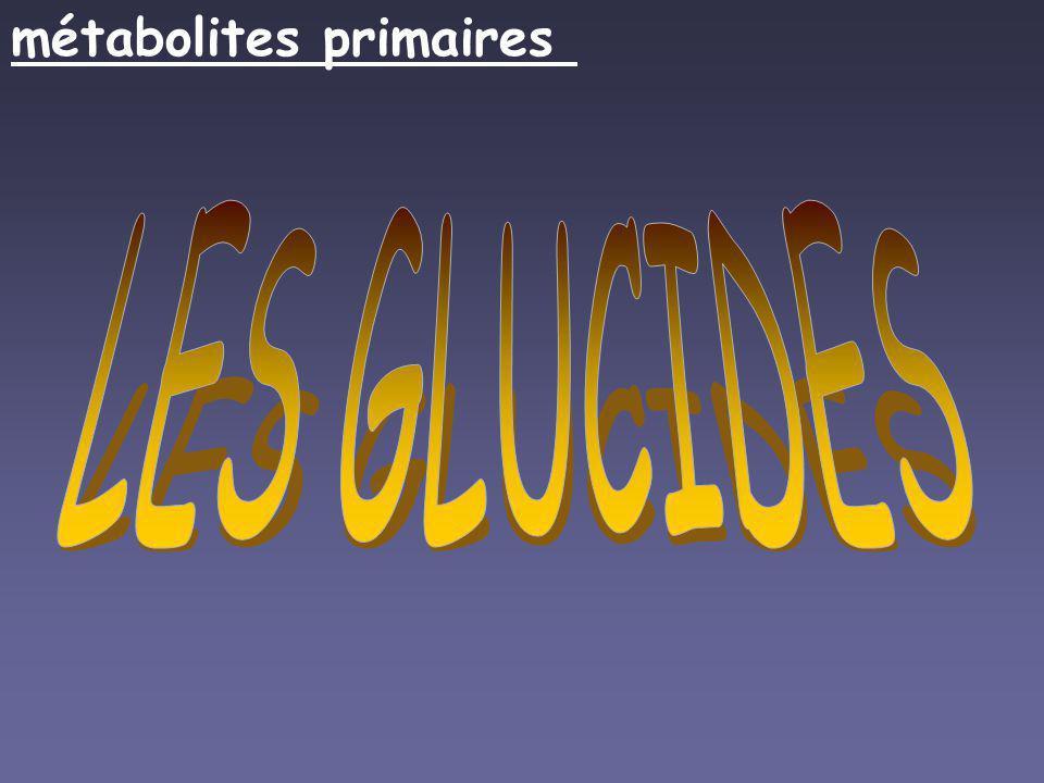 LES GLUCIDES métabolites primaires