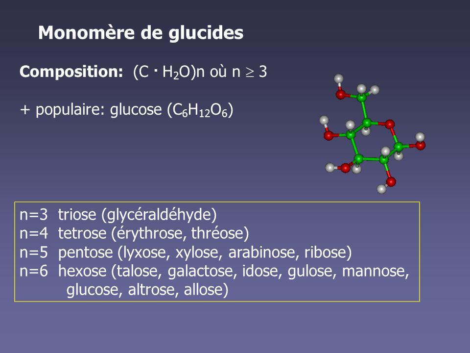 Monomère de glucides Composition: (C . H2O)n où n  3