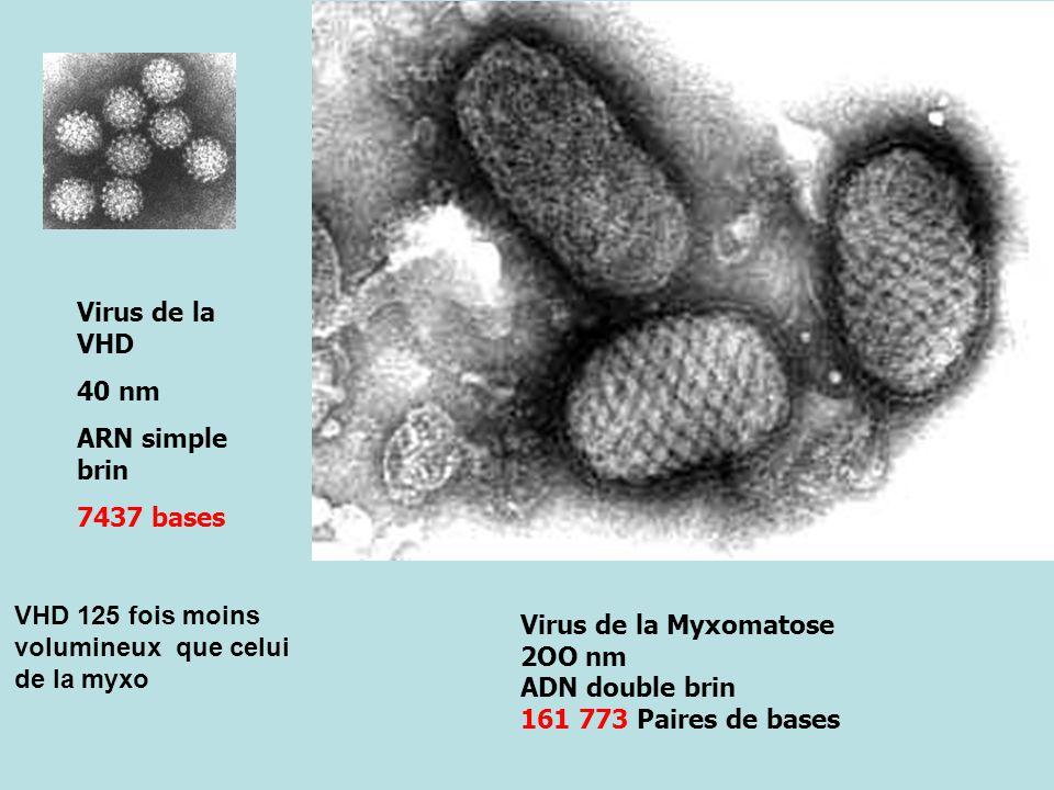 Virus de la VHD 40 nm. ARN simple brin. 7437 bases. VHD 125 fois moins volumineux que celui de la myxo.