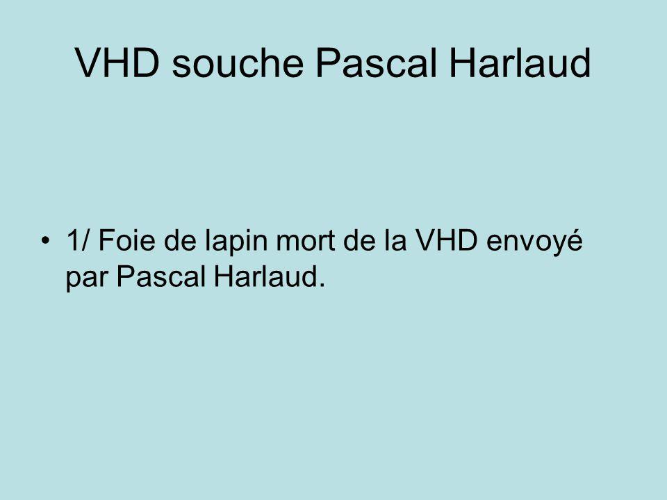 VHD souche Pascal Harlaud