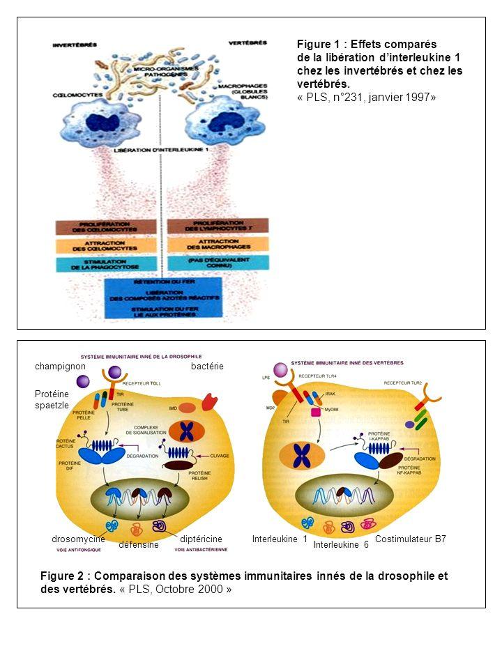 Figure 1 : Effets comparés de la libération d'interleukine 1