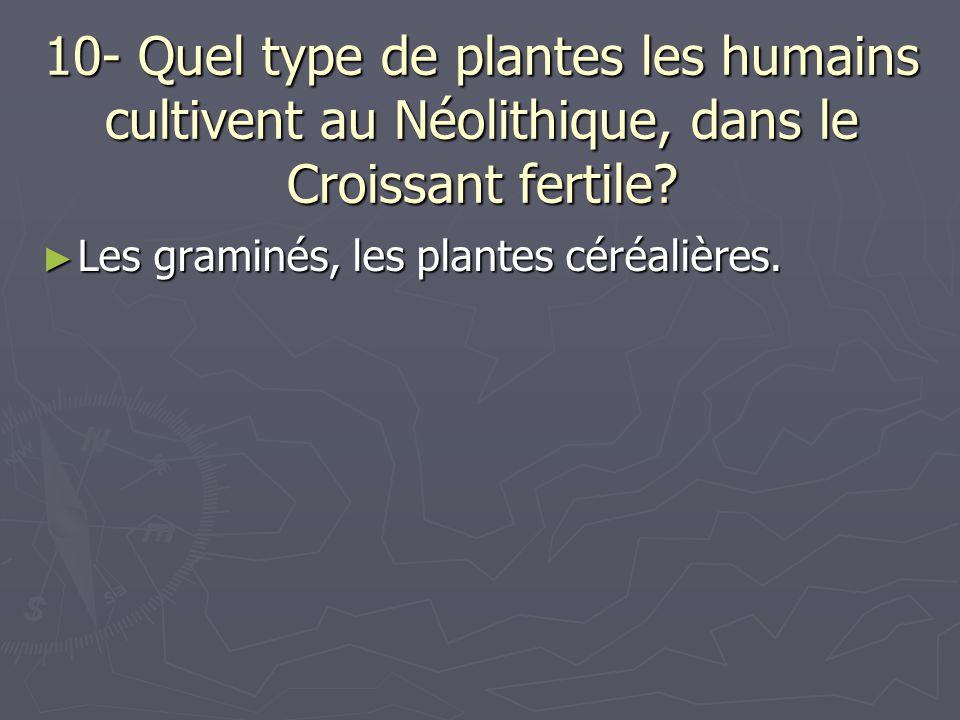 10- Quel type de plantes les humains cultivent au Néolithique, dans le Croissant fertile