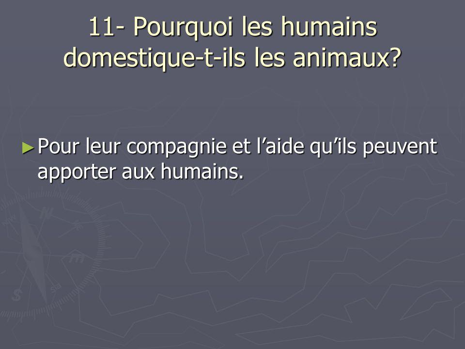 11- Pourquoi les humains domestique-t-ils les animaux