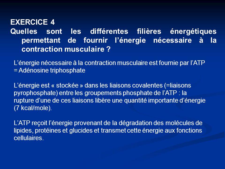 EXERCICE 4 Quelles sont les différentes filières énergétiques permettant de fournir l'énergie nécessaire à la contraction musculaire