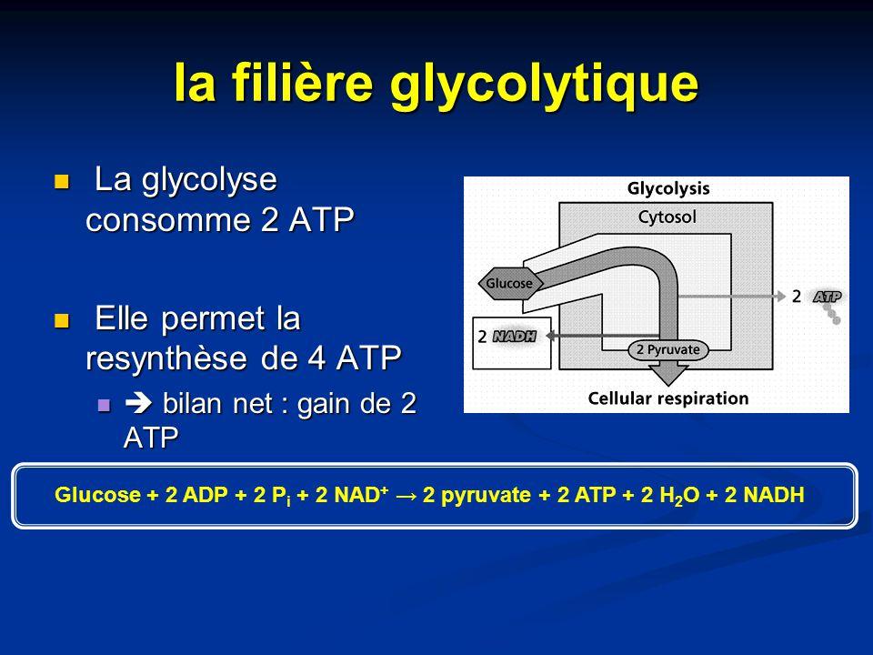 la filière glycolytique