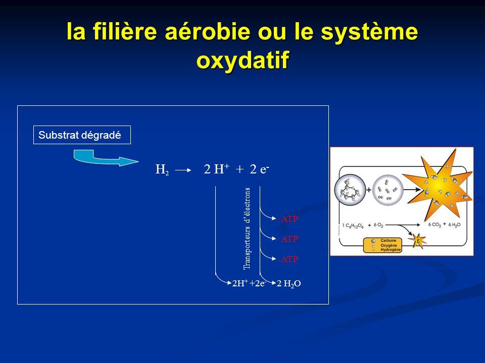la filière aérobie ou le système oxydatif