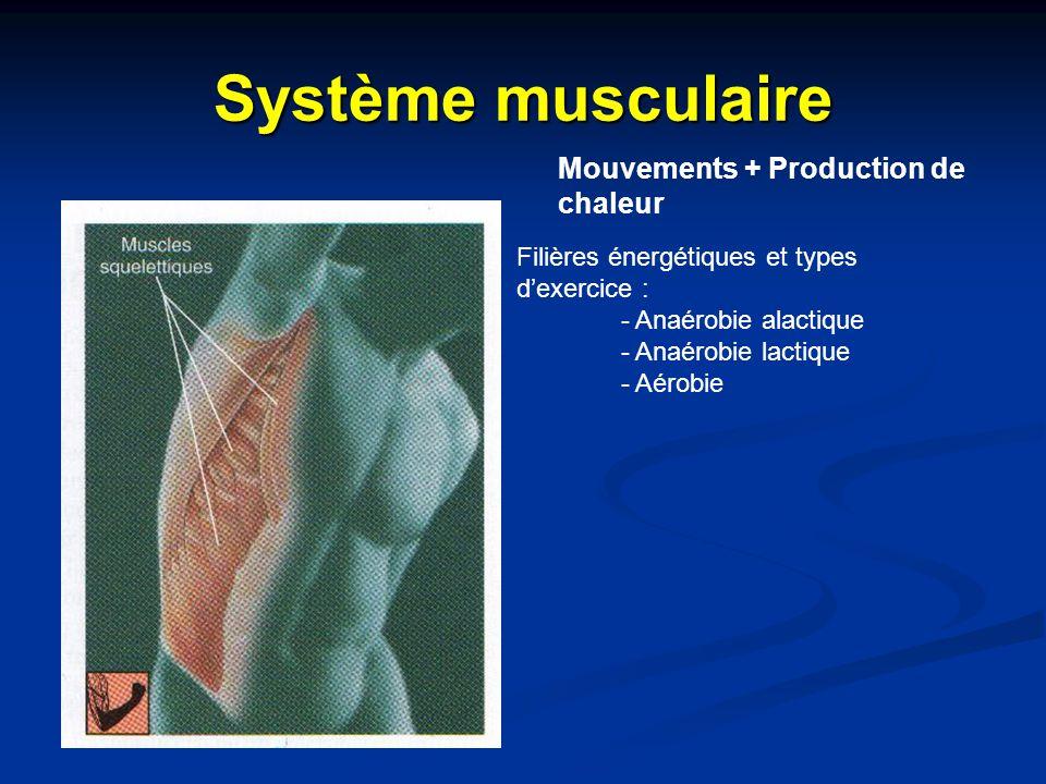 Système musculaire Mouvements + Production de chaleur