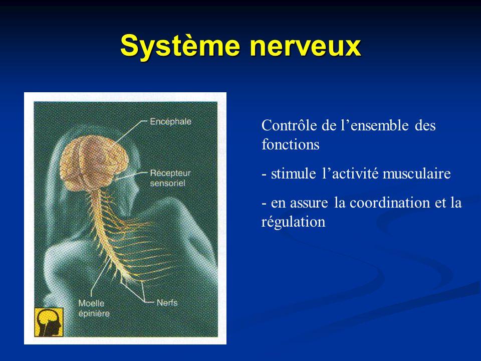 Système nerveux Contrôle de l'ensemble des fonctions