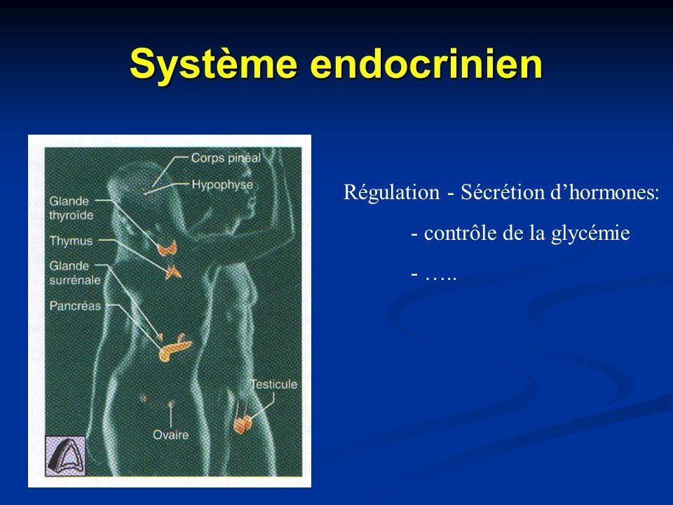 Système endocrinien Régulation - Sécrétion d'hormones: