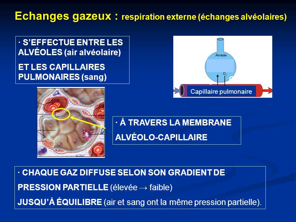Echanges gazeux : respiration externe (échanges alvéolaires)