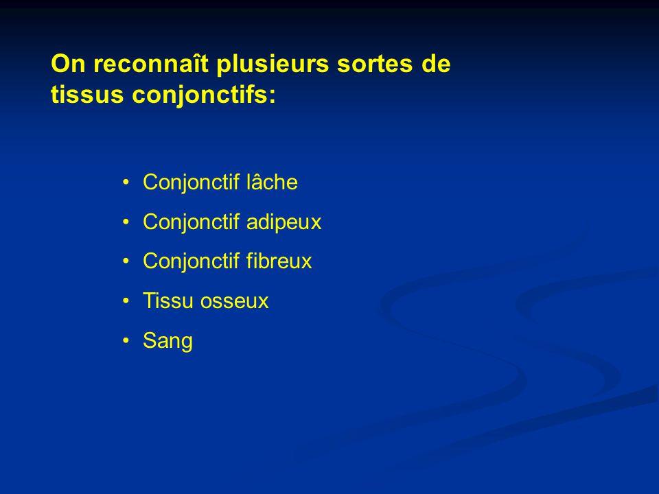On reconnaît plusieurs sortes de tissus conjonctifs: