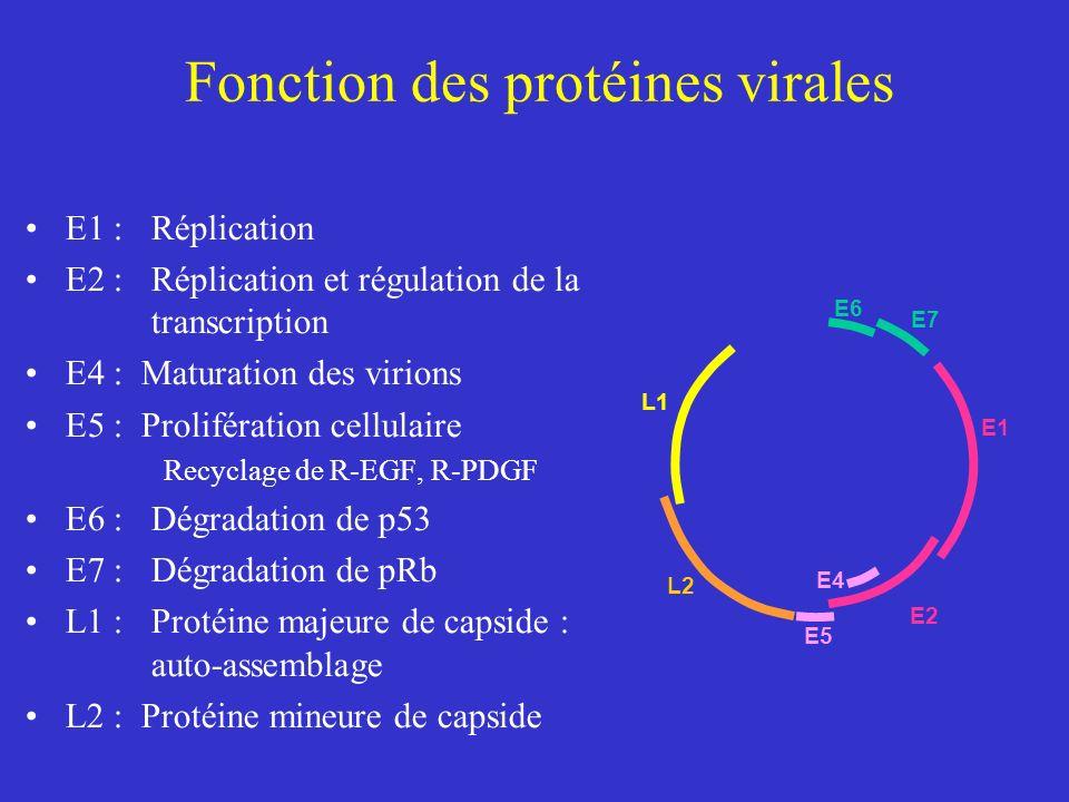 Fonction des protéines virales
