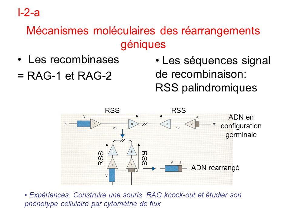 Mécanismes moléculaires des réarrangements géniques