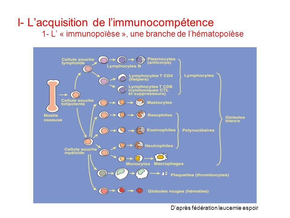 I- L'acquisition de l'immunocompétence 1- L' « immunopoïèse », une branche de l'hématopoïèse