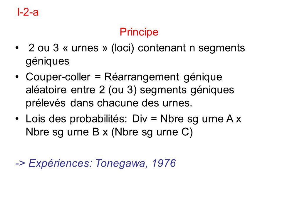 I-2-aPrincipe. 2 ou 3 « urnes » (loci) contenant n segments géniques.