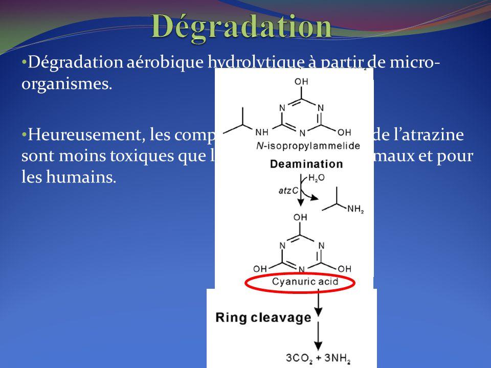 Dégradation Dégradation aérobique hydrolytique à partir de micro-organismes.