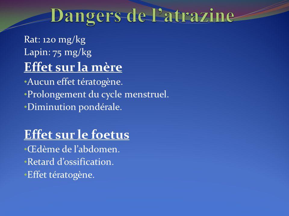 Dangers de l'atrazine Effet sur la mère Effet sur le foetus