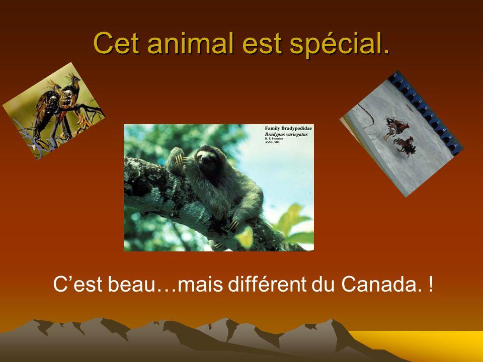 Cet animal est spécial. C'est beau…mais différent du Canada. !