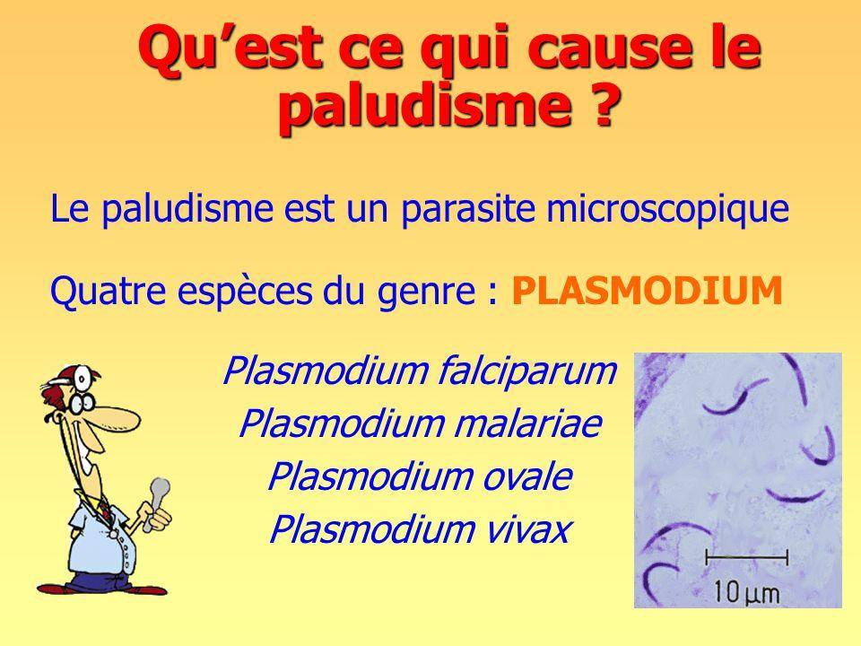Qu'est ce qui cause le paludisme