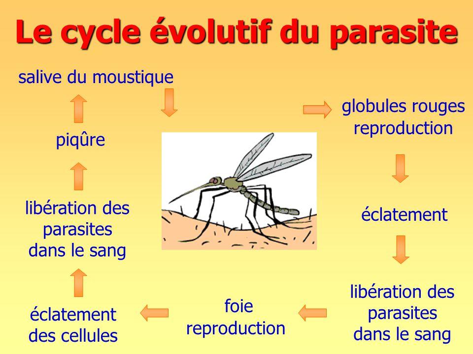 Le cycle évolutif du parasite