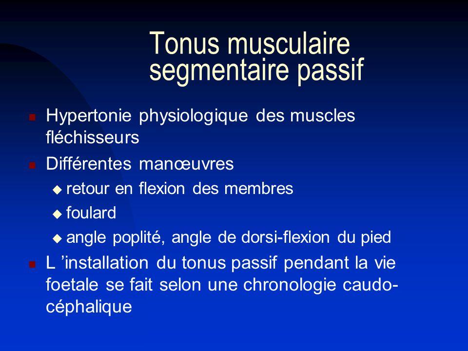 Tonus musculaire segmentaire passif
