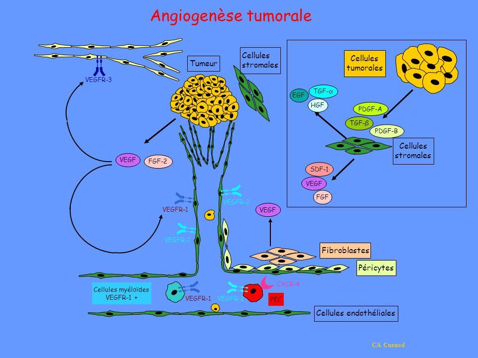 Cellules endothéliales